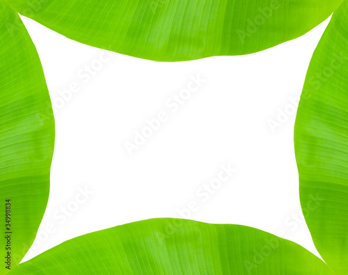 Banana leaf frame on white\