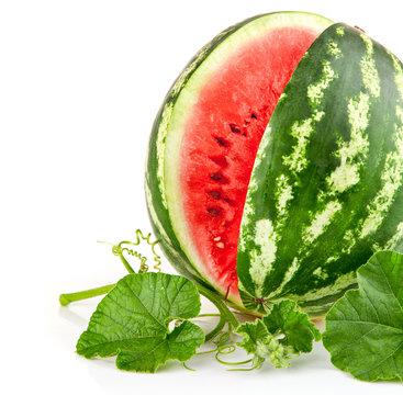 juicy watermelon in cut with green leaf