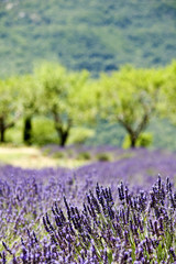 Provence, typical landscape. France,
