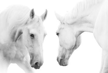 Wall Mural - white horses