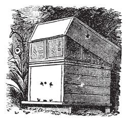 Beehive or Beehives vintage engraving
