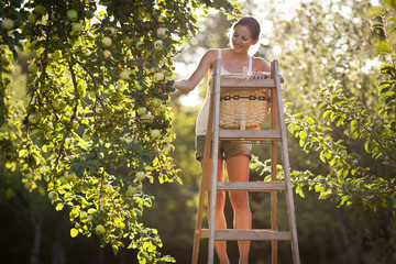 Young woman up on a ladder picking apples