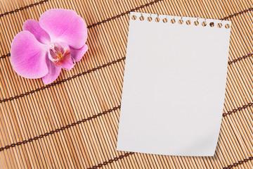 Orchidea e Notes