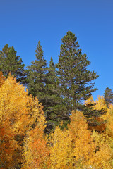 Bright orange, yellow and red trees