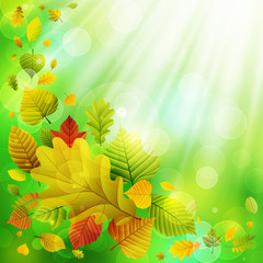 Wall Mural - Autumn background with colorful leaves