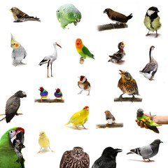 Group of birds on the white background