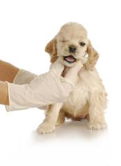 veterinary care