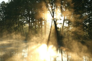 Keuken foto achterwand Bos in mist Rising sun enters the deciduous forest in the fog