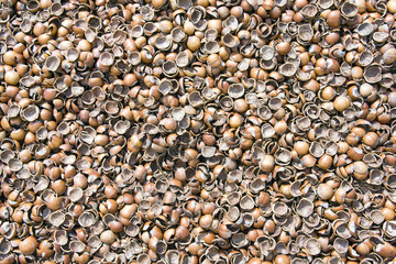 nut shells background
