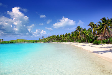 Wall Mural - Contoy Island palm treesl caribbean beach Mexico