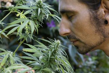 Haschisch Legalisierung