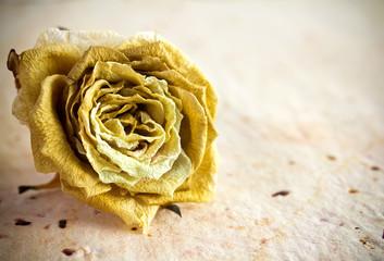 Dried rose.