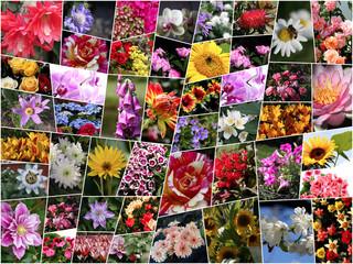 Collage mit Blumen