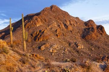 Desert Landscape of Saguaro National Park