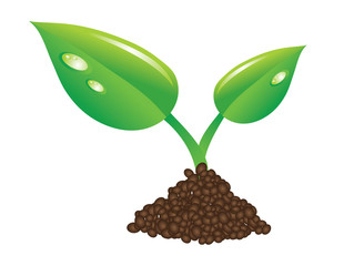 young  green plant sprout illustration