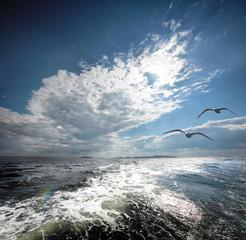 The White sea.