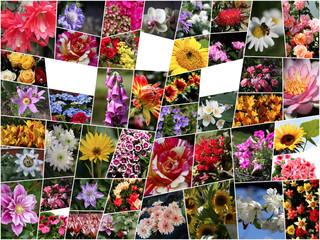 Blumen als Collage