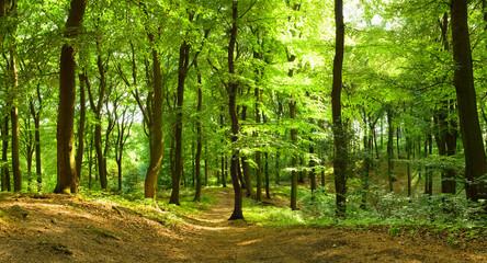 Foto auf Acrylglas Straße im Wald Waldweg im Sommer