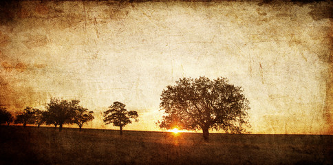 Tree in the summer field. Photo in old image style.