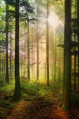 Foto auf Acrylglas Straße im Wald Forêt féérique