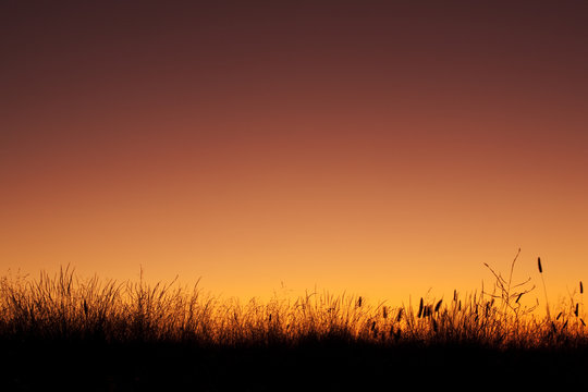 Grass silhouetted against a colorful sky shortly after sunset