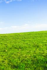 Wide Green Fairway