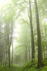 Keuken foto achterwand Bos in mist Path in the deciduous forest on a foggy spring morning