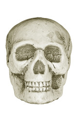 Human skull isolated on white.