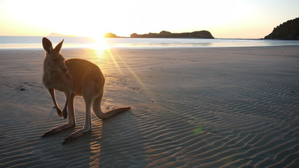 Tuinposter Kangoeroe Guten Morgen Australien