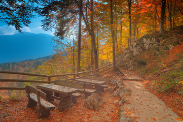 Vivid golden autumn forest at Triglav national park. Slovenia.