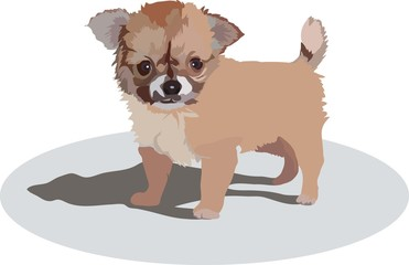 image of little puppy of unknown breed