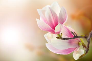 Photo on textile frame Magnolia magnolia