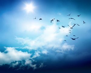 birds sky background