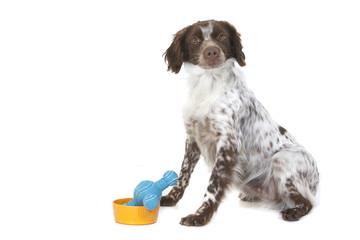 Photos illustrations et vid os de chien d 39 arr t for Cout d un chien assis