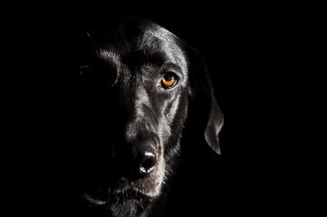 Schwarzer Labrador-Mix im Portrait