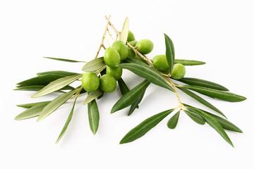 Fototapete - Ramoscelli di ulivo e olive