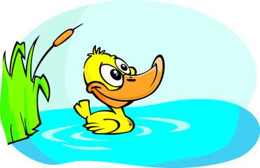 Little Yellow duck