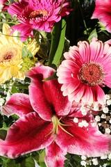 Schöne Blumenfarben