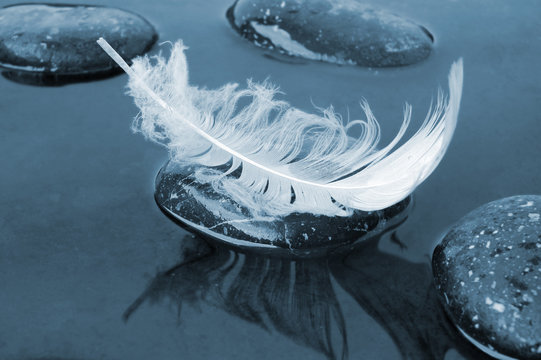 Feather on black water