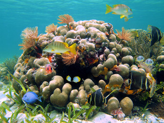Coral reef with colorful tropical fish and marine worms, Caribbean sea, Costa Rica, Central America