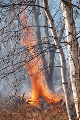 A controlled burn with orange flames in a winter woods