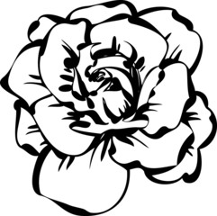 black and white sketch of rose
