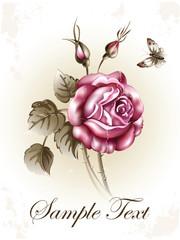 Illustration of a Rose. vintage postcard congratulation