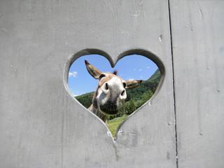 Foto auf Gartenposter Esel esel
