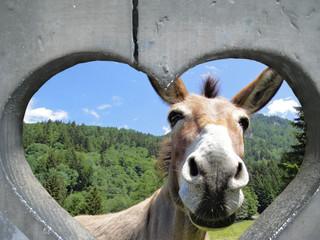 Foto auf Leinwand Esel esel