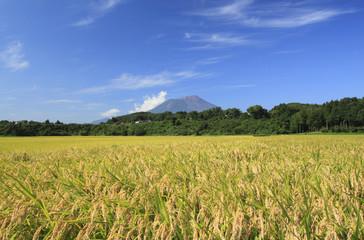 岩手山と田園風景