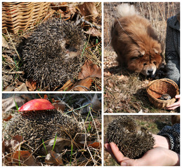 Collage with the hedgehog