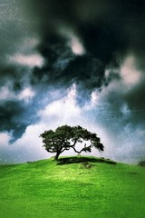 Single tree over vintage grunge sky background