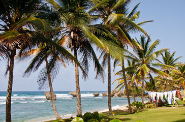 Laundry on Coast by Palm Trees