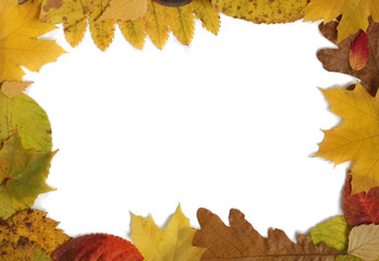 Frame from autumn leaves.